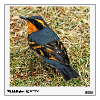 Stunning Varied Thrush on the Lawn Wall Sticker