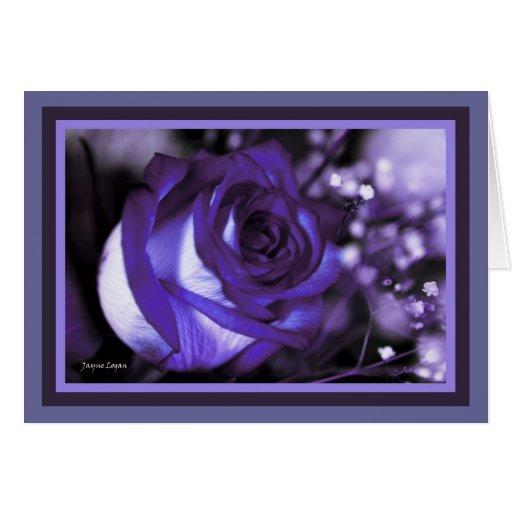 stunning Violet Rose! Blank Card (Template) Card