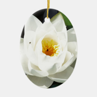 Stunning Waterlily With Gold Centre Ceramic Oval Decoration