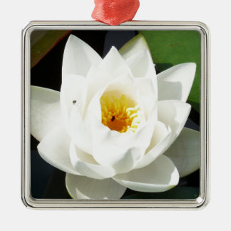Stunning Waterlily With Gold Centre Silver-Colored Square Decoration