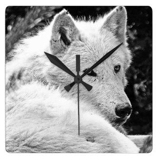 Stunning White Wolf Square Wallclock