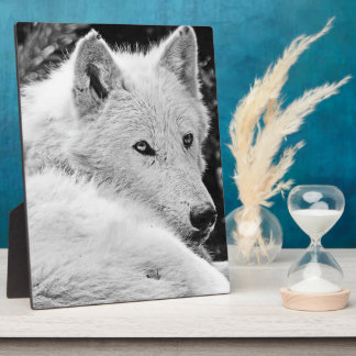 Stunning White Wolf Display Plaques