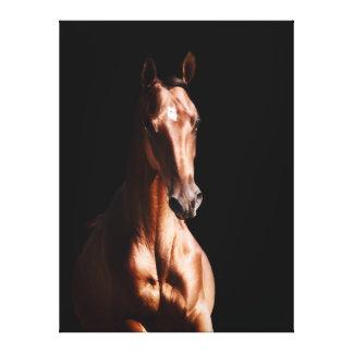Stunning Young Stallion Canvas Prints