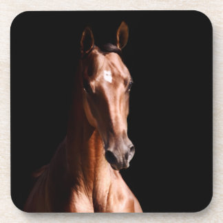 Stunning Young Stallion Drink Coaster