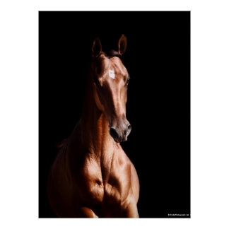 Stunning Young Stallion Poster