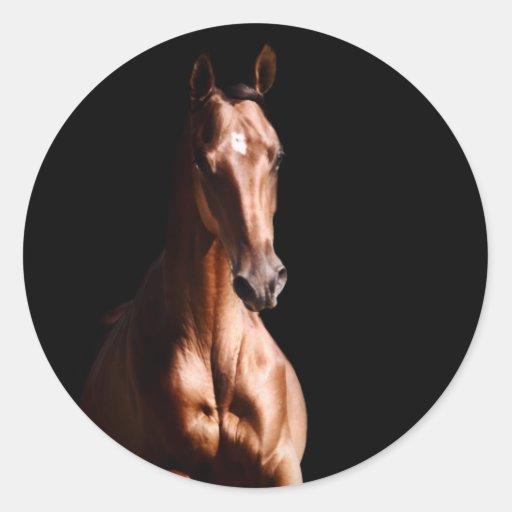 Stunning Young Stallion Sticker