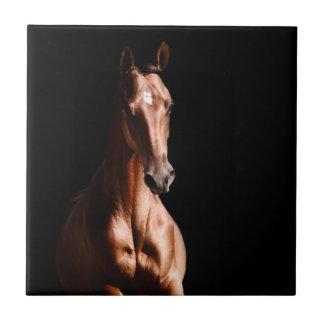 Stunning Young Stallion Tile