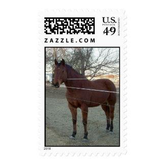Sturdy Joe Postage Stamp