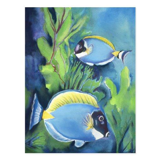 Sturgeon Fish Postcard