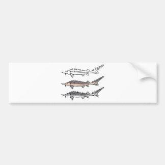 Sturgeon rare fish bumper sticker