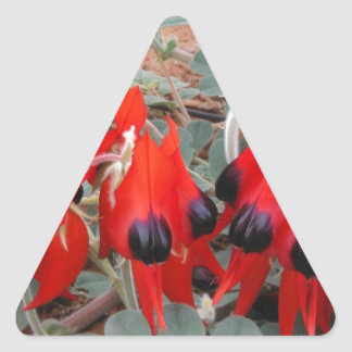 sturt desert pea triangle sticker