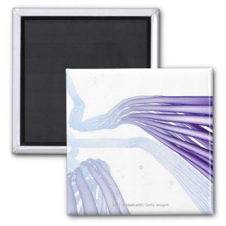 Stylised nerve fibers 2 inch square magnet