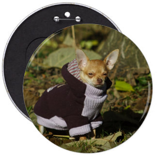 Stylish Dressed Chihuahua Puppy Button