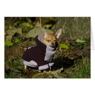 Stylish Dressed Chihuahua Puppy Card