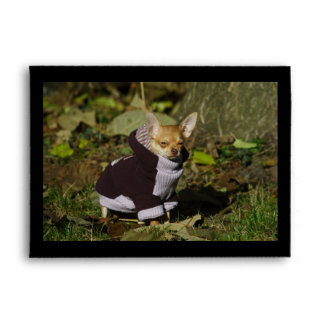 Stylish Dressed Chihuahua Puppy Envelope