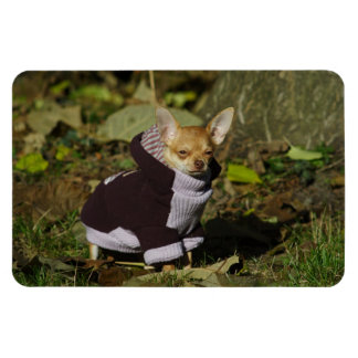 Stylish Dressed Chihuahua Puppy Magnet