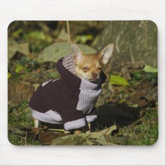 Stylish Dressed Chihuahua Puppy Mouse Pad