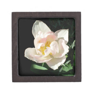 Stylish Pale Pink Tulip Gift Box