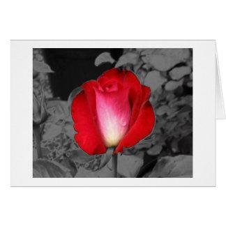 Stylized Rose Card