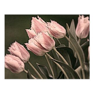 Stylized Tulips Postcard