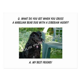 ¡Su foto aquí! Mezcla carelia del perro del oso Tarjetas Postales