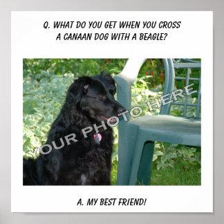 ¡Su foto aquí Mi mezcla del perro de Canaan del m Posters
