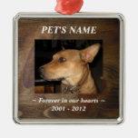 Su foto del mascota en fondo de madera bonito de ornato