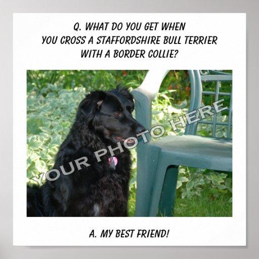 ¡Su foto! Mezcla de Staffordshire bull terrier del Póster