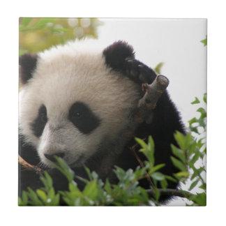 Su Lin, cachorro de oso de panda gigante en el par Azulejo Cuadrado Pequeño