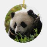 Su Lin, cachorro de oso de panda gigante en el par Ornamentos Para Reyes Magos