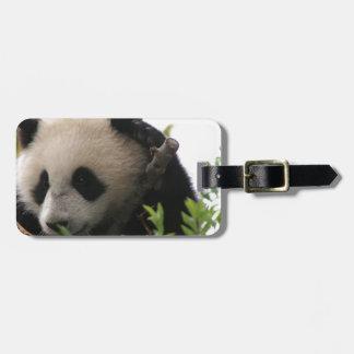 Su Lin, cachorro de oso de panda gigante en el par Etiquetas Maletas