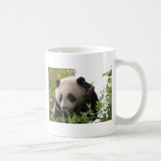 Su Lin, cachorro de oso de panda gigante en el Taza
