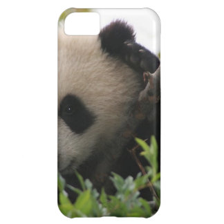 Su Lin, giant panda bear cub at the San Diego Zoo iPhone 5C Cover