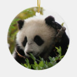 Su Lin, giant panda bear cub at the San Diego Zoo Double-Sided Ceramic Round Christmas Ornament