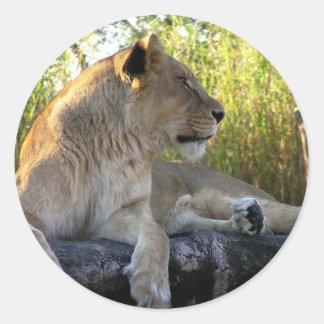 Su majestad: Los pegatinas de la leona Pegatina Redonda