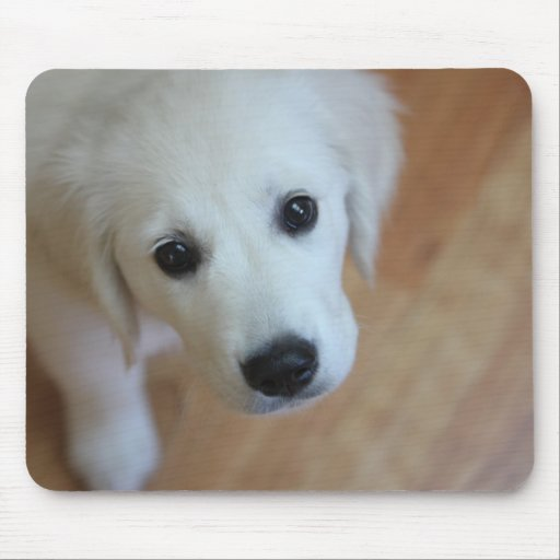 Su mascota en un mousepad alfombrilla de ratones