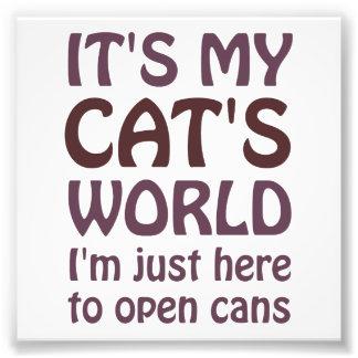 Su mi mundo de los gatos - apenas abro las latas fotografía