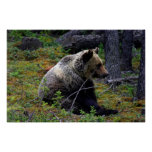 Su oso de peluche impresiones