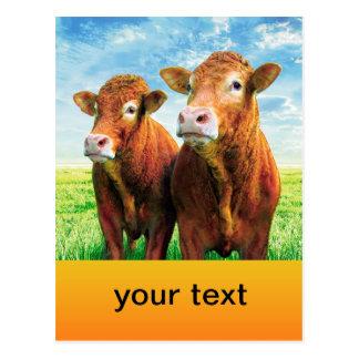 su texto aquí tarjetas postales