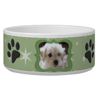 Su un plato del perro de la estrella - foto del pe comedero para mascota