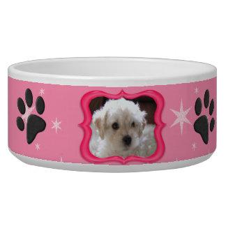 Su un plato del perro de la estrella - foto del pe bol para perro