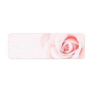 Suaves hermosos palidecen - la flor color de rosa etiqueta de remitente