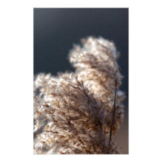 suaves spring