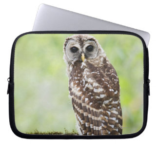 Sub-adult recently having left the nest computer sleeve