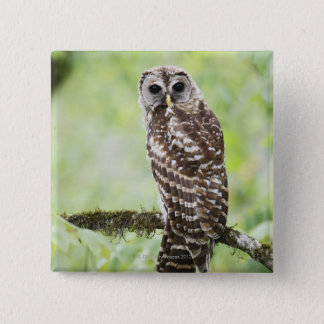 Sub-adult recently having left the nest pinback button