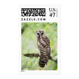 Sub-adulto que deja recientemente la jerarquía sello postal