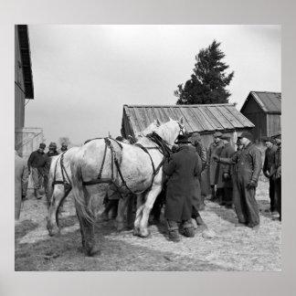 Subasta del caballo de proyecto, los años 30 posters