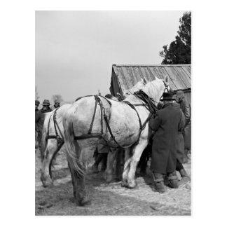 Subasta del caballo de proyecto, los años 30 tarjetas postales