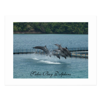 Subic Bay Dolphins Postcard