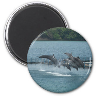 Subic Dolphins Exhibitionist  Magnet